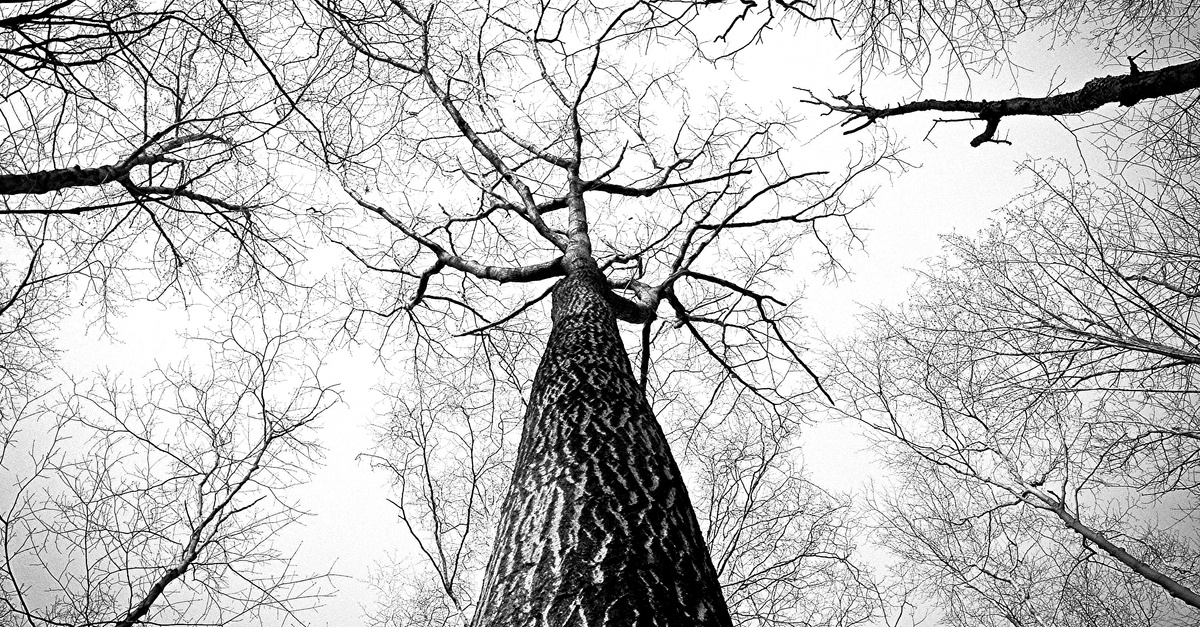black-and-white-branches-tree-high-landscape.jpg