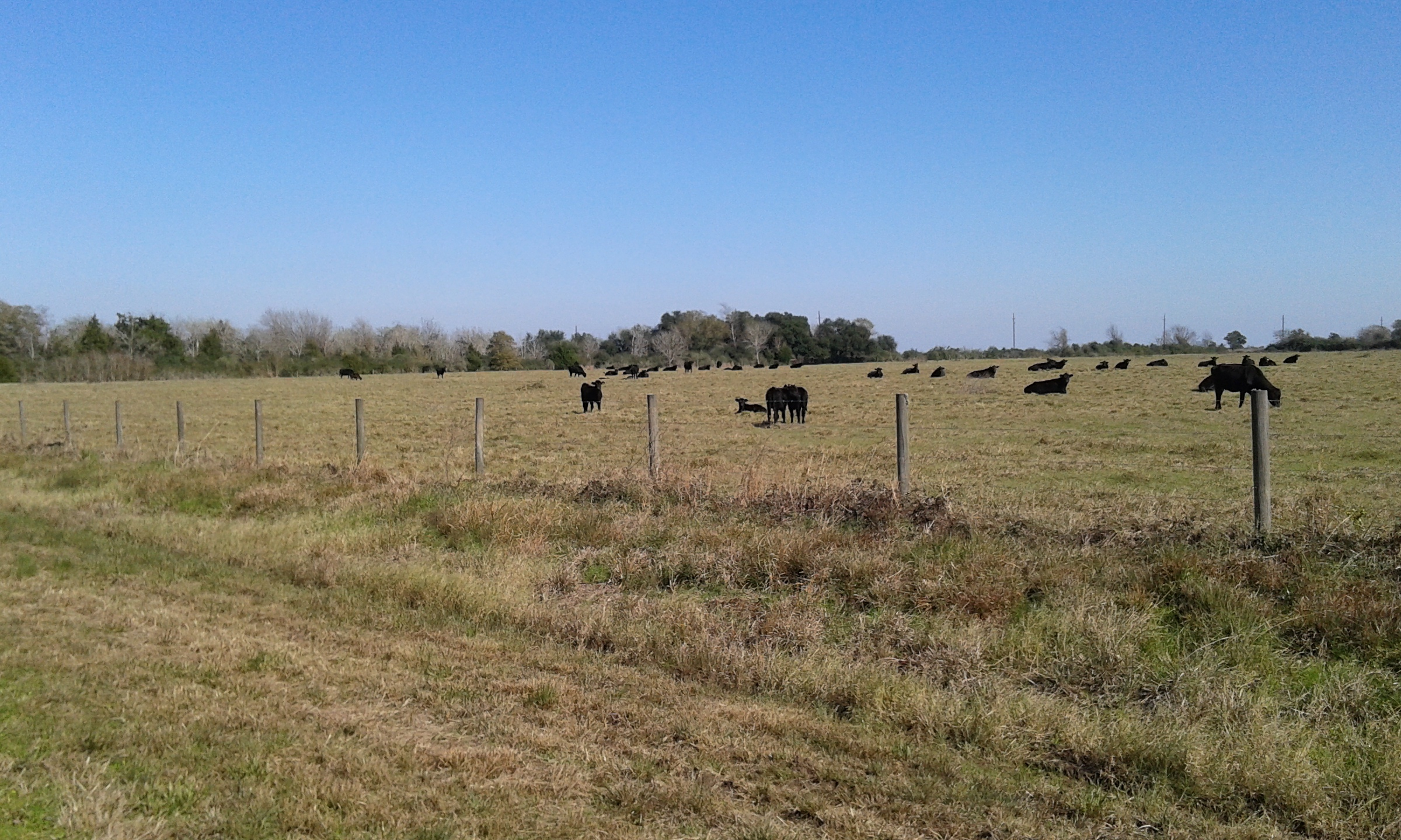 Cows, cows, and wait, more cows!