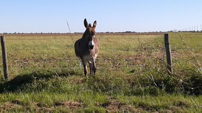 Donkeys like Texas, too!