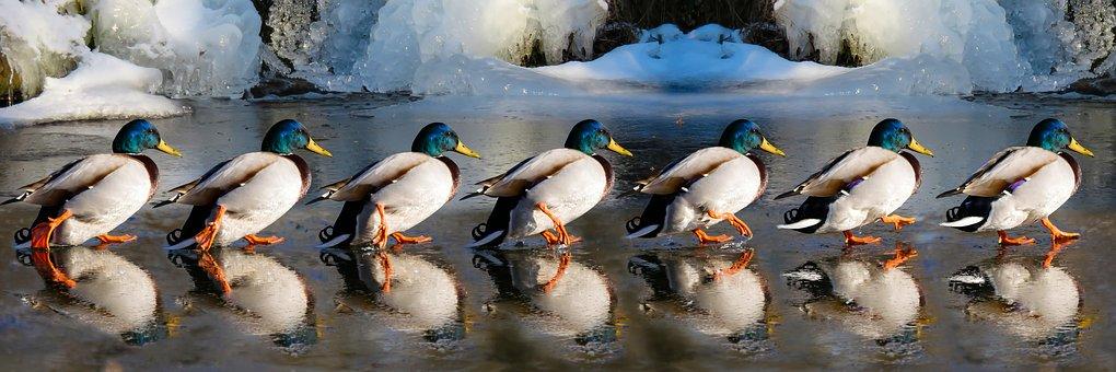 Duck, Duck, Doc…#1 The GeneralPractitioner